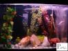 aquário de kinguios junho/2009