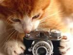 Le Chat Caméra