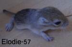 Elodie-57