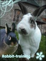Rabbit-training