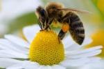 abeillesdeslandes