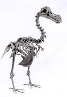 dodoraptor