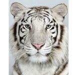 tigrutzul10