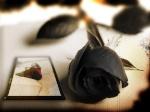las rosas de la vida