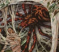 Araignée Sournoise