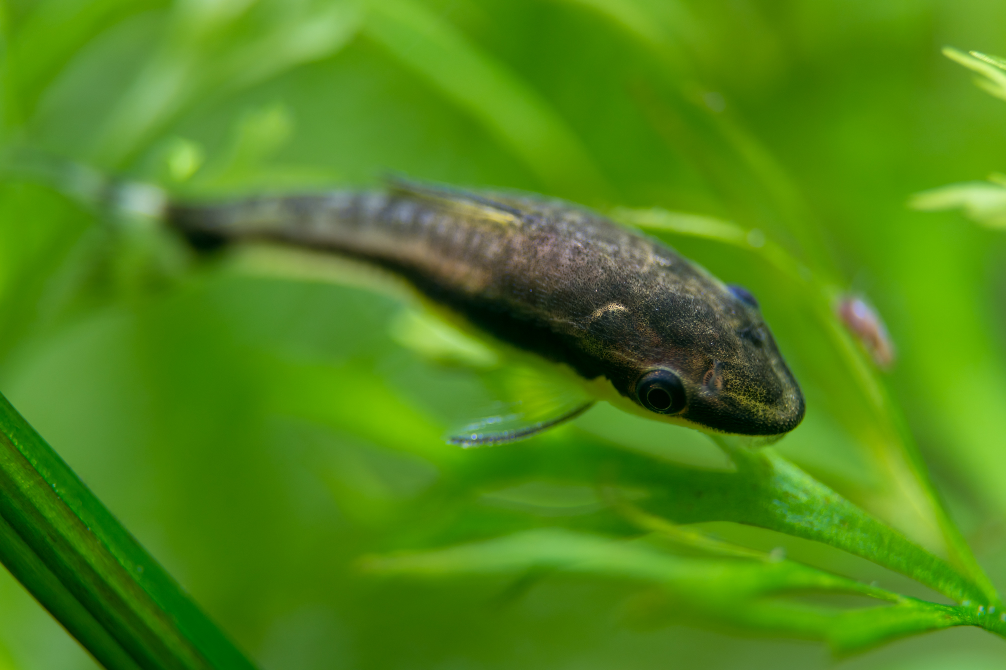 Recueil de photo aquariophiles de qualités Dsc_0113
