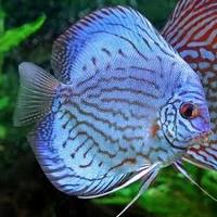 MisterFish