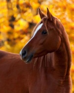 ~Lovers horse~