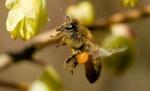 wasp13