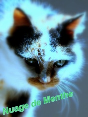 Nuage de Menthe