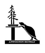 Antognin