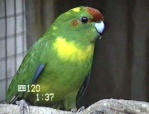 Birdy91