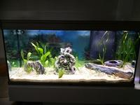 Bourses aquariophiles de l'AAR 250-14