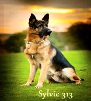 sylvie313