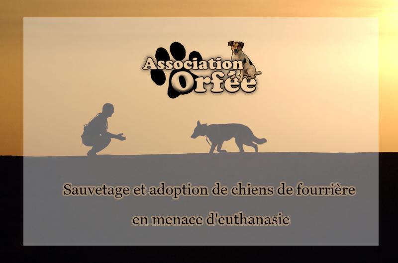 Association Orfée